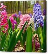 Flowers In Michigan  Acrylic Print
