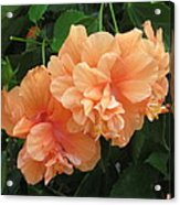Flowers In Peach Acrylic Print