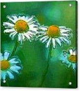 Flowers In Sunlight Acrylic Print