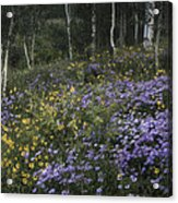 Flowers In The Aspen Forest Acrylic Print