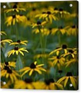 Flowers In The Fields Acrylic Print