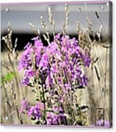 Flowers In The Grass 8891 Acrylic Print