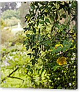 Flowers In The Park Acrylic Print