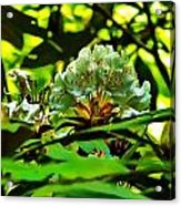 Flowers In The Woods Acrylic Print