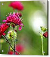 Flowers Intwined  Acrylic Print