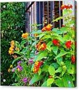 Flowers No 8 Acrylic Print