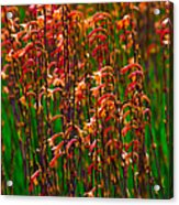 Flowers Of Fire Acrylic Print