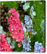 Flowers Of Pink And Blue Acrylic Print