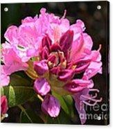 Flowers Of Spring Acrylic Print