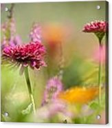 Flowers Of The Garden Acrylic Print