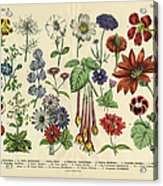 Flowers Of The Garden, Victorian Acrylic Print