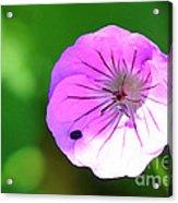 Flowers Of Uttarakand Acrylic Print