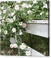Flowers On Fence Acrylic Print