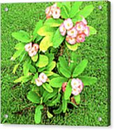 Flowers On Green Acrylic Print