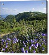 Flowers On Summer Mountain  Acrylic Print