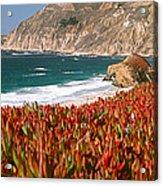 Flowers On The Coast, Big Sur Acrylic Print
