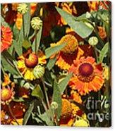 Flowers On The High Line Acrylic Print