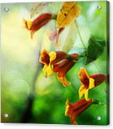 Flowers On The Vine Acrylic Print
