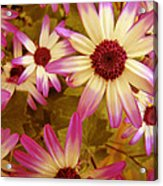 Flowers Pink And White Acrylic Print
