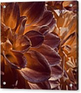 Flowers Should Also Turn Brown In Autumn Acrylic Print