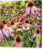 Flowers Standing Tall Acrylic Print