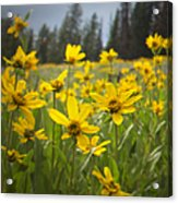 Flowers That Are Wild Acrylic Print