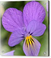 Flowers That Smile Acrylic Print