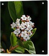 Flowers-tiny White Acrylic Print