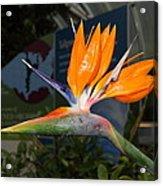 Flowers - Us Botanic Garden - 011311 Acrylic Print