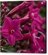 Flowers-waimea Arboretum  Acrylic Print