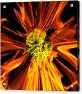 Flowery Flames Acrylic Print