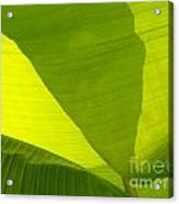 Flowing Banana Leaf Acrylic Print