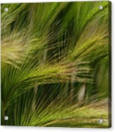 Flowing Grasses Acrylic Print