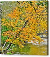 Flowing River Leaning Tree Acrylic Print