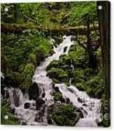Flowing Stream In Spring Acrylic Print