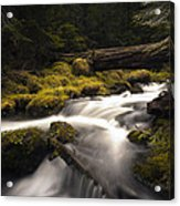 Flowing Waters - Olympic National Park Acrylic Print
