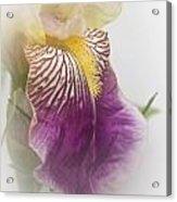 Fl.purple4 Acrylic Print