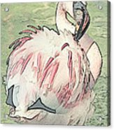 Fluffing Flamingo  Acrylic Print