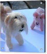 Fluffums - Lhasa Apso Tibetan Terrier And Piglet Acrylic Print