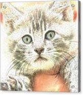 Fluffy Kitten Acrylic Print