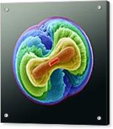 Fluorapatite Crystal Acrylic Print by Eye of Science