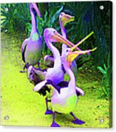 Fluorescent Pelicans Acrylic Print
