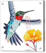 Da177 Flutter By Daniel Adams Acrylic Print