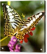 Fluttering Acrylic Print