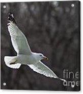 Fly Be Free Acrylic Print