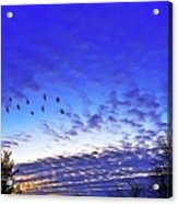 Fly By At Sunset Acrylic Print