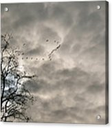 Fly By Acrylic Print