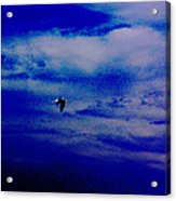 Fly By Night Acrylic Print