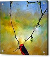 Fly Catcher In Heart Shaped Branch Acrylic Print