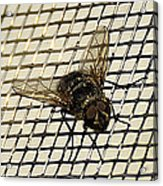 Fly From The Series The Imprint Of Man In Nature Acrylic Print
